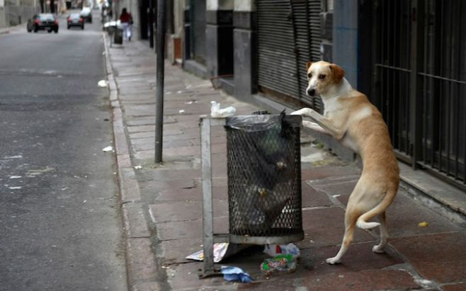 BUSCAN CONTROLAR NATALIDADHay más de dos perros por hogar