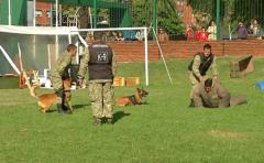 Ejército presentó su plantel de perros entrenados para buscar sustancias explosivas