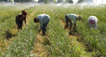 INIA aporta US$ 2: para mitigar brecha tecnológica entre productores