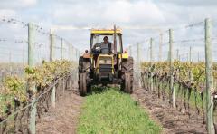 Análisis sobre la tributación de las rentas agropecuarias