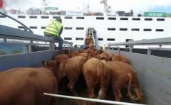 """Ing. Peyrou: la exportación de ganado en pie """"es imprescindible"""""""