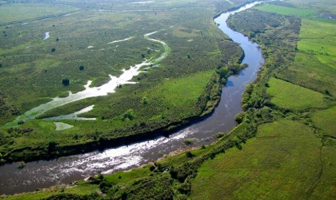 Cuatro especies de anfibios desaparecieron de la cuenca del Santa Lucía