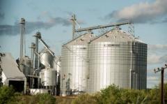 Cosecha de producción arrocera creció 6%