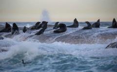 Los cinco mayores peligros para los océanos del mundo