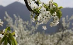 Unesco examinará 28 potenciales Reservas de la Biosfera
