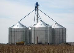 Siembra de trigo tendrá este año una merma del 20%