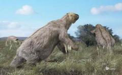 Descubren nueva especie de perezoso prehistórico en Argentina