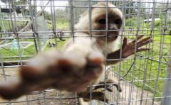 Interpol identifica tráfico de animales protegidos en la internet profunda