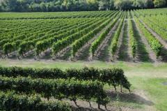 Brasil, EEUU, México y Rusia compran el 85% de la exportacion de vinos nacionales