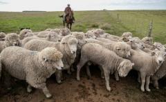 CLU y CTO muestran las innovaciones para el productor ovino