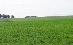 Campos ganaderos en el norte cotizan entre 1.800 y 3.200 dólares por hectárea