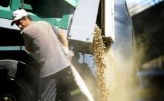 Producción de soja en Uruguay alcanza máximo histórico