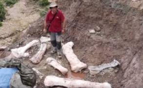 Hallan restos de un dinosaurio de 20 metros en España