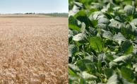 """Con una cobertura del 56% entre cultivos de verano y de invierno el BSE impulsa """"paquete agrícola"""""""
