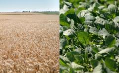 "Agro: BSE impulsa ""paquete agrícola"""