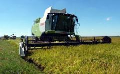 Productores en busca de un mejor precio para el arroz