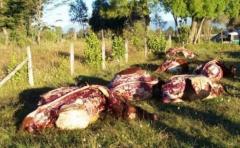 Federación Rural ve positivas las modificaciones en el Código Penal