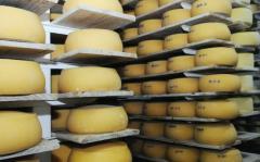 Exportación de productos lácteos uruguayos creció 3% en primer semestre