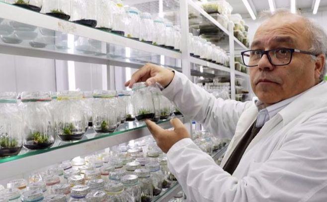 Descubren planta antártica que puede actuar como filtro solar para humanos