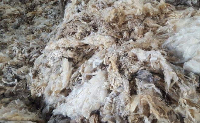 Se mejora la producción cárnica en el sector ovino