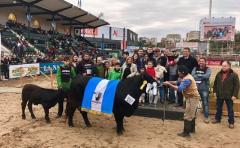Grandes expectativas para el Angus en Expo Palermo 2017