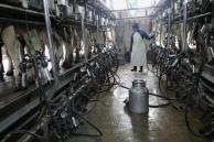 Diputados sugiere 6% en devoluciones impositivas a exportaciones lácteas