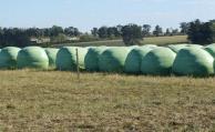 Forraje: Prolesa destaca las reservas de cultivos de verano