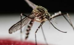 Científicos aseguran que virus del Zika puede ser transmitido por vía oral