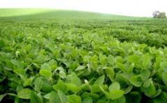 Apostando a la eficiencia, próxima campaña de soja podría alcanzar 1.200.000 hás