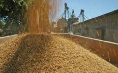 Soja: con un precio de referencia de 350 dólares la tonelada, hay que apostar a la producción