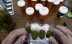 Empresa uruguaya avanza en proceso para vender cannabis medicinal