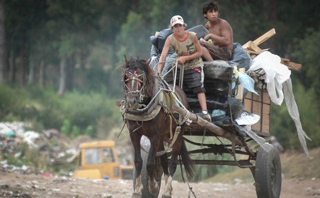 Abren llamado para adoptar caballos que fueron usados para clasificación.  Javier Calvelo/ adhocFOTOS
