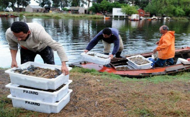 Exportaciones pesqueras aumentaron un 21,25% hasta agosto