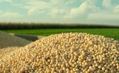 """Dado la mayor demanda, la soja puede tener un """"cambio de rumbo� en el precio"""