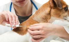 Pintos: Hay que terminar con la superpoblación de perros