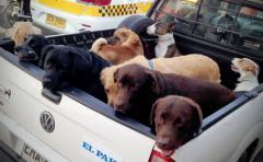 """Cotryba: """"Hay que bajar lo más rápidamente que se pueda la población canina"""""""