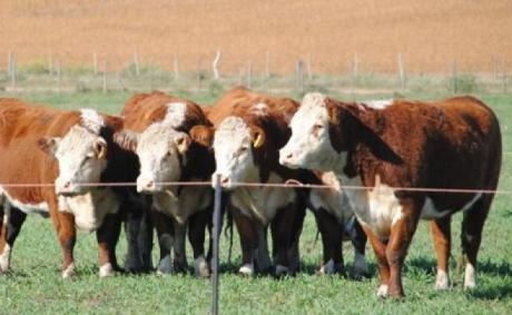"""Los toros de Kiyú"" abre la zafra este sábado"