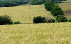 Invierno: lluvias y altas temperaturas inciden en la sanidad de los cultivos