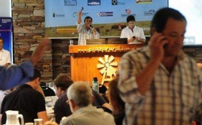 Plazarural: Con volumen y ganados certificados, se destacan 2.400 angus