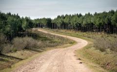 4ta Jornada Forestal del INIA, en la línea de la biodiversidad y la capitalización