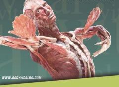 """""""Body Worlds Vital"""", la fascinante exposición sobre el cuerpo humano, llega a Montevideo este mes"""