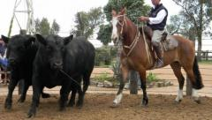 """Angus con genética para la """"nueva ganadería"""""""