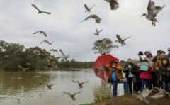 El misterio de las aves suicidas de Ecuador