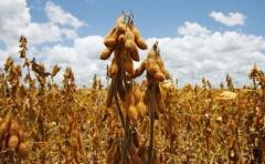 BSE lanzó seguro contra sequía