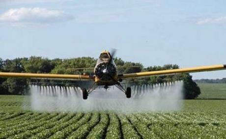 Con exceso de humedad, comienza la cosecha de colza