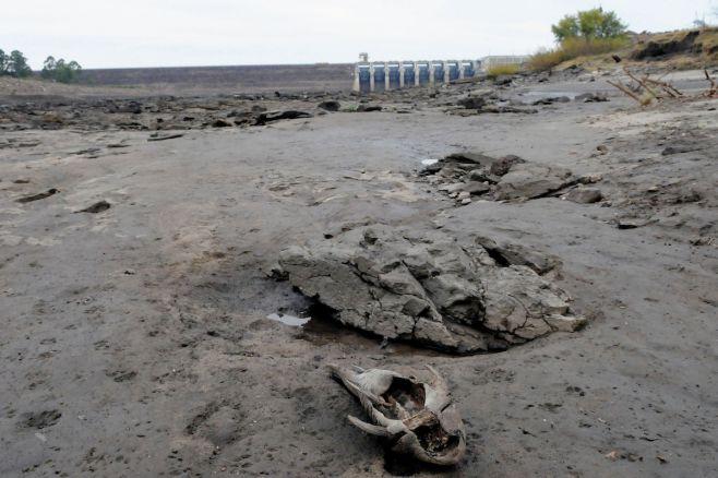 Vaciado de represa de Palmar se hizo 93 veces antes en el año sin mortandad de peces
