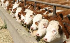 """Adaptarse a los cambios puede ser """"generar sinergia entre ganadería y agricultura"""""""
