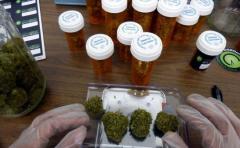 Quedó habilitada la venta de marihuana medicinal en farmacias