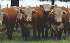 Con más de 100 años favoreciendo a la ganadería, El Baqueano pone lo mejor a venta