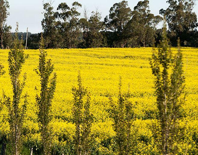 Continua producción de soja no transgénica tras primer año positivo